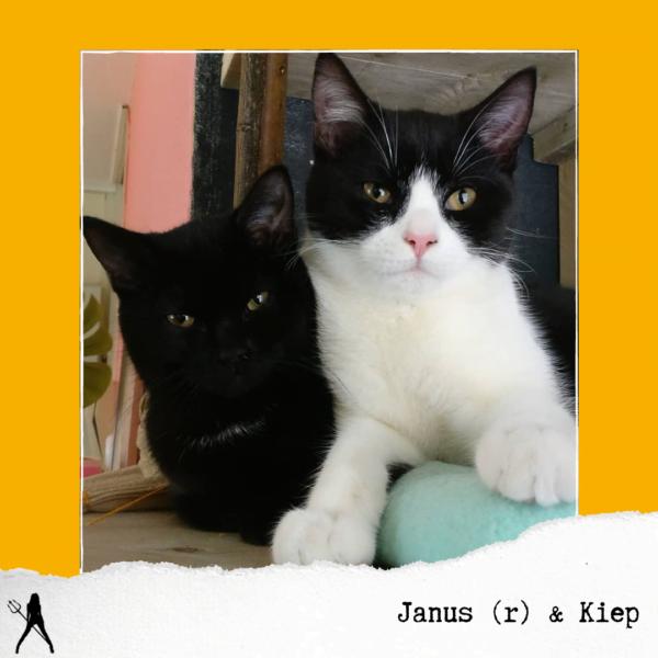 Janus & Kiep cats